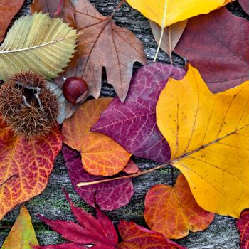 How to go green when nature is turning red and gold