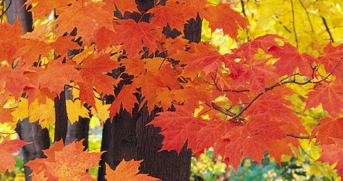 Avoid cliches to make your fall display stand out