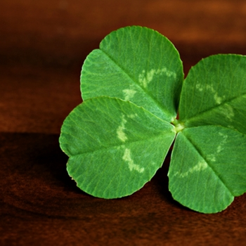 Gearing up for St. Paddy's Day – what to buy now